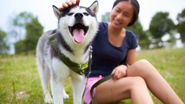 Top 25 Husky Dog Names