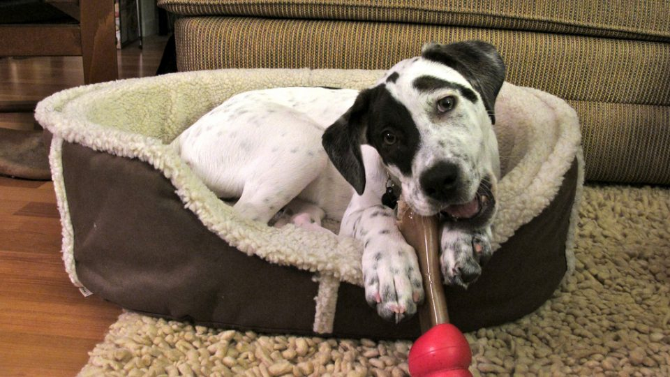 The Top 8 Most Durable Dog Toys The Dog People By Rover Com