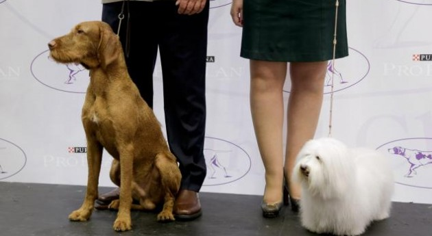 Are You Ready for the National Dog Show This Thanksgiving?