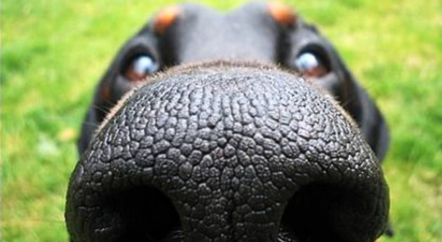 Can You Identify the Dog Breed by Their Nose? [Quiz]
