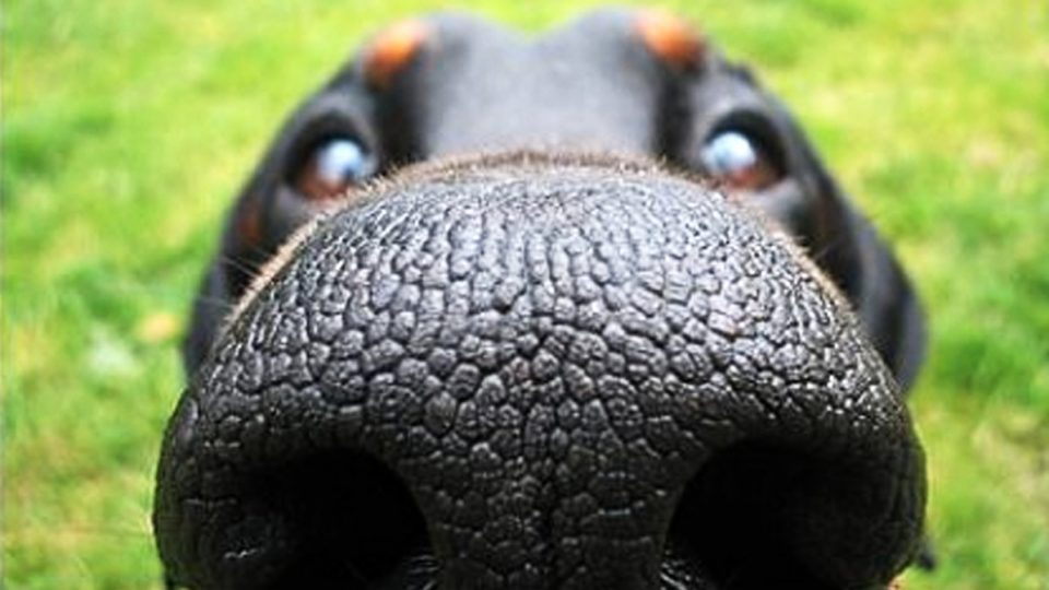 Can You Identify the Dog Breed by Their Nose? [Quiz] | The Dog