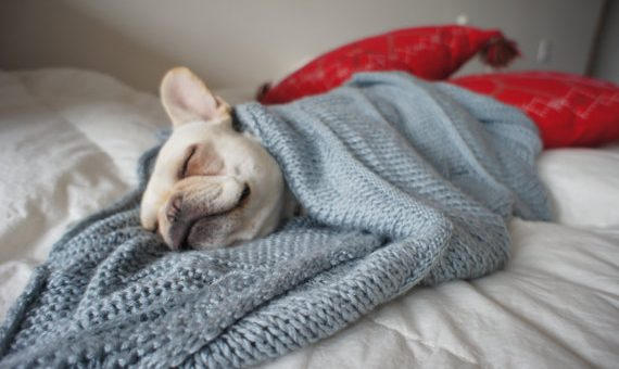 13 Dogs Snuggling Up for the Winter