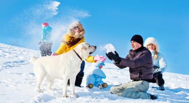 8 Must-Have Items for Walking Your Dog in a Winter Wonderland