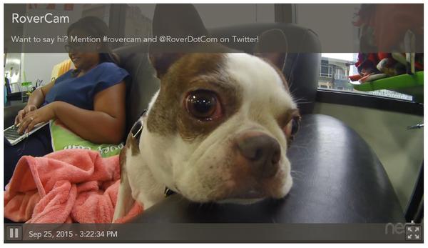 #rovercam screenshot