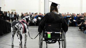 service dog project great dane graduation