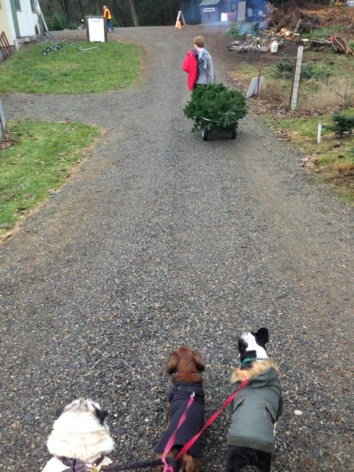 8 Tips for Taking Your Dog to the Christmas Tree Farm | The Dog ...