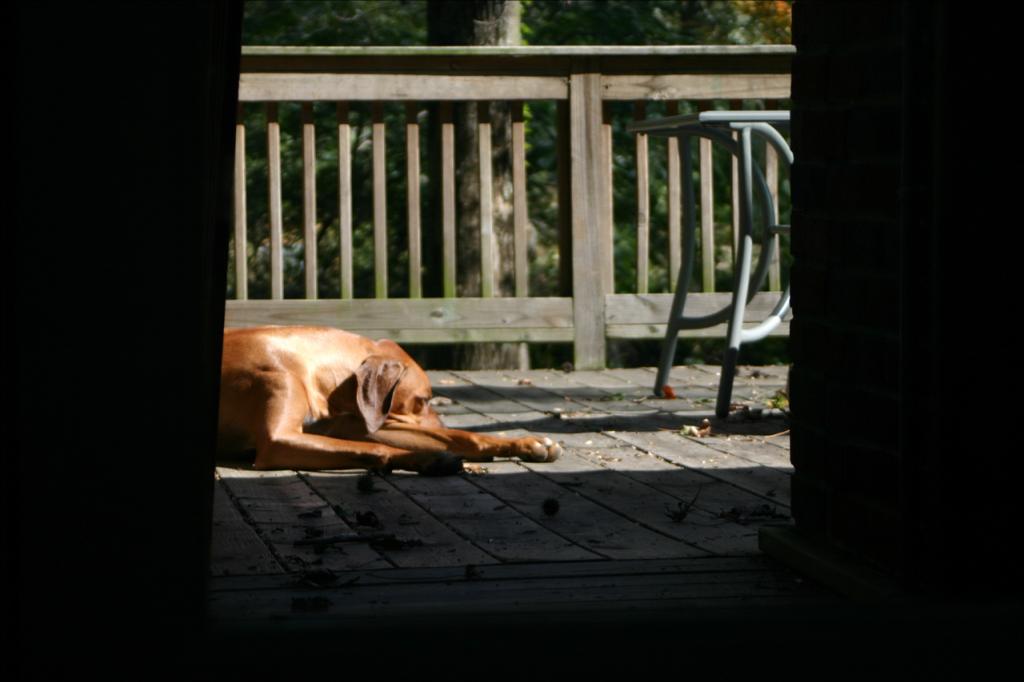 DogCity-Chicago-Dog-Sleeping