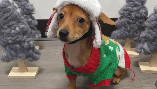 183 Best Christmas Dog Names for 2018