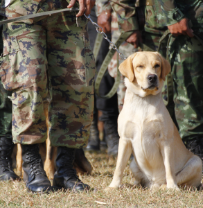 Local-Resources-5-military-dog