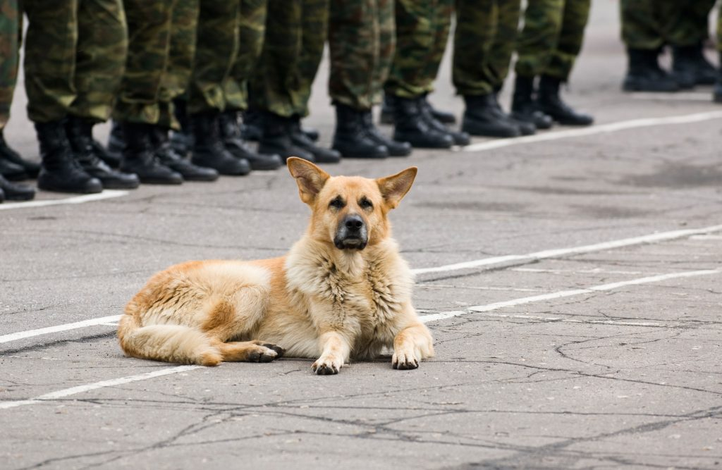 DogCity-Chicago-Guard-Dog-Military