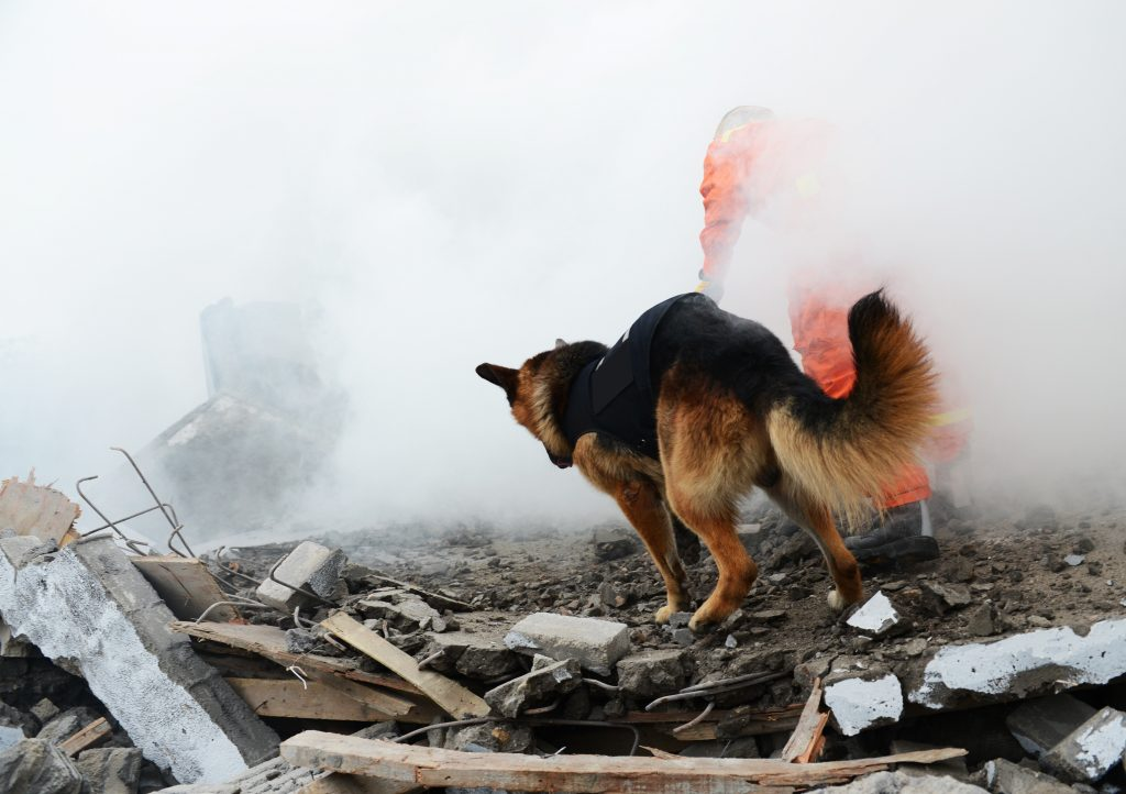 DogCity-Chicago-Rescue-Dog