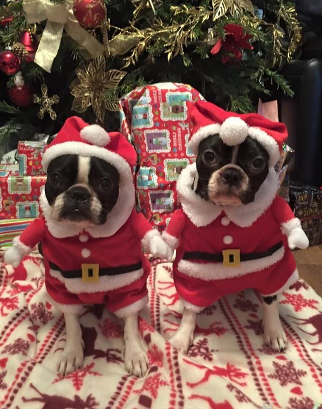 12 Grumpy Dogs Dressed Up For Christmas The Dog People