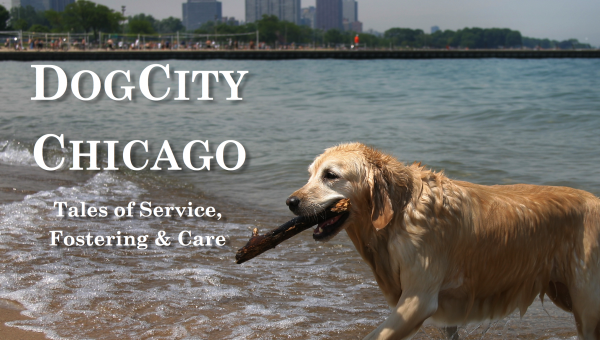 These Amazing Chicago Dog Lovers are Changing the World, One Pet at a Time