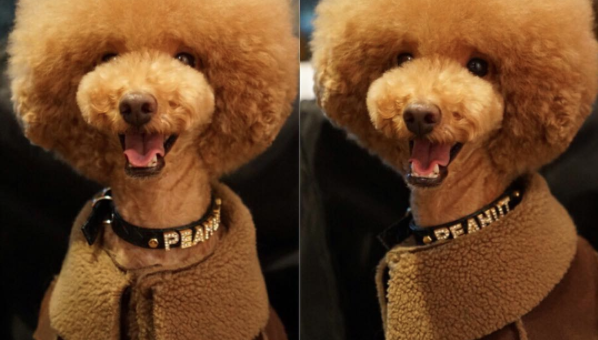 12 Dogs Sporting the Winter's Hottest Looks