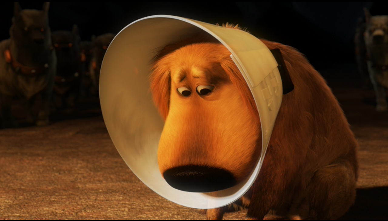 i-do-not-like-the-cone-of-shame-up-pixar