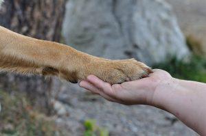 paw-hand