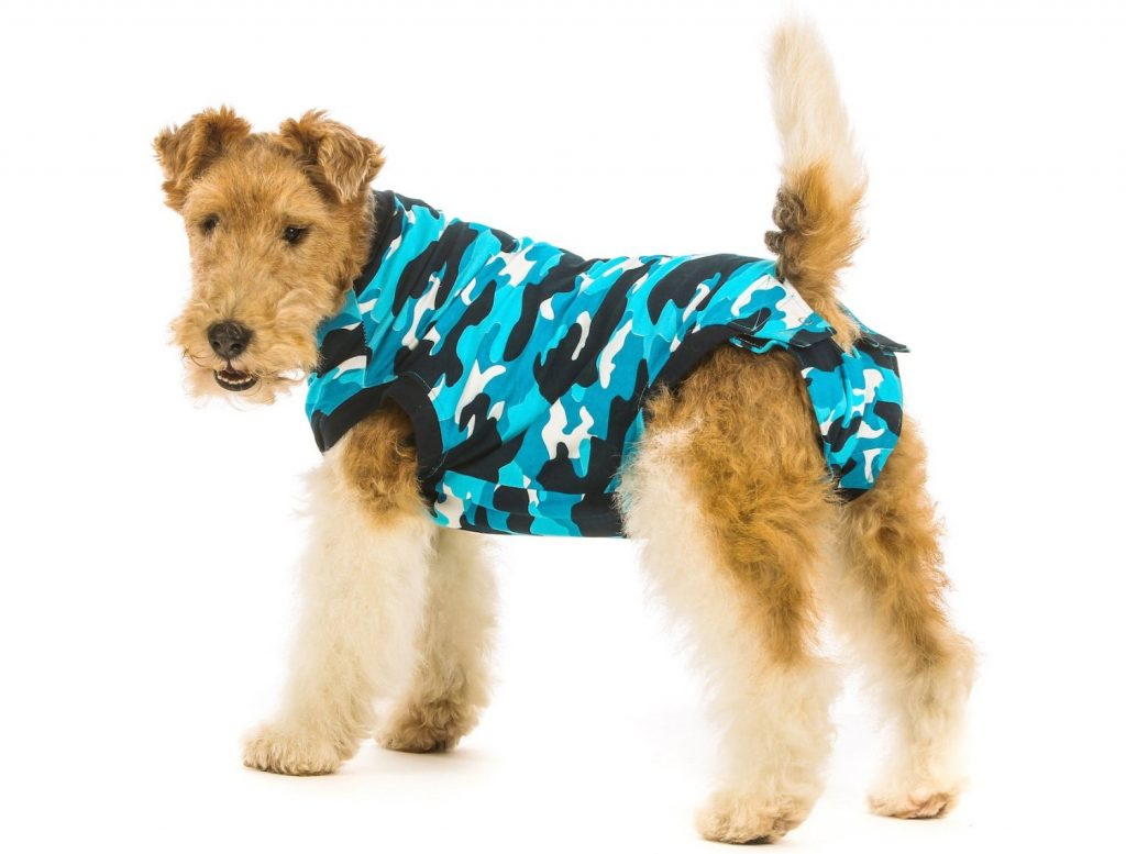 suitical terrier dog recovery surgery ecollar alternative