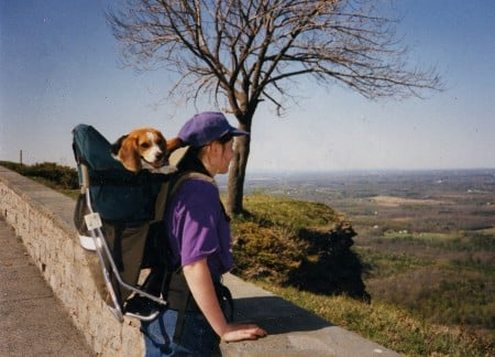 tough traveler beagle dog pack