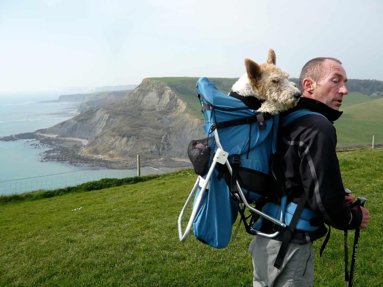 Dog Perch Backpack Uk