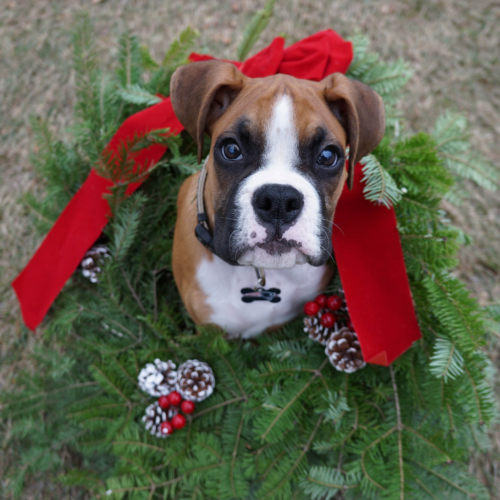 Giving a Puppy as a Gift: the Right Way to Do Christmas ...