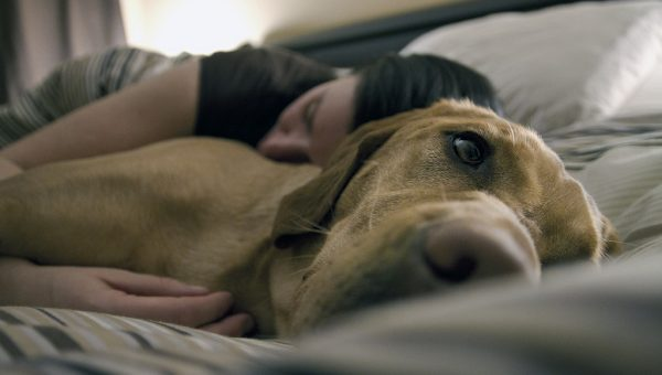 True or False: Letting Your Dog in the Bed is Ruining Your Relationship