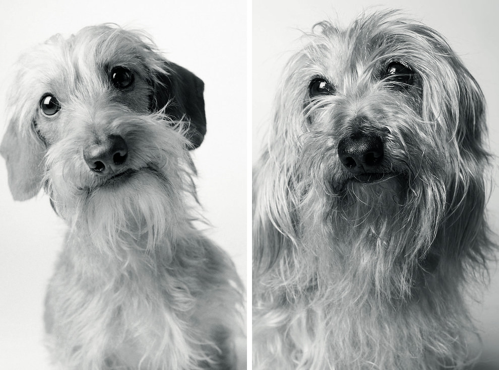 Amanda_Jones_Dog_Years_photography_book_then_and_now_05