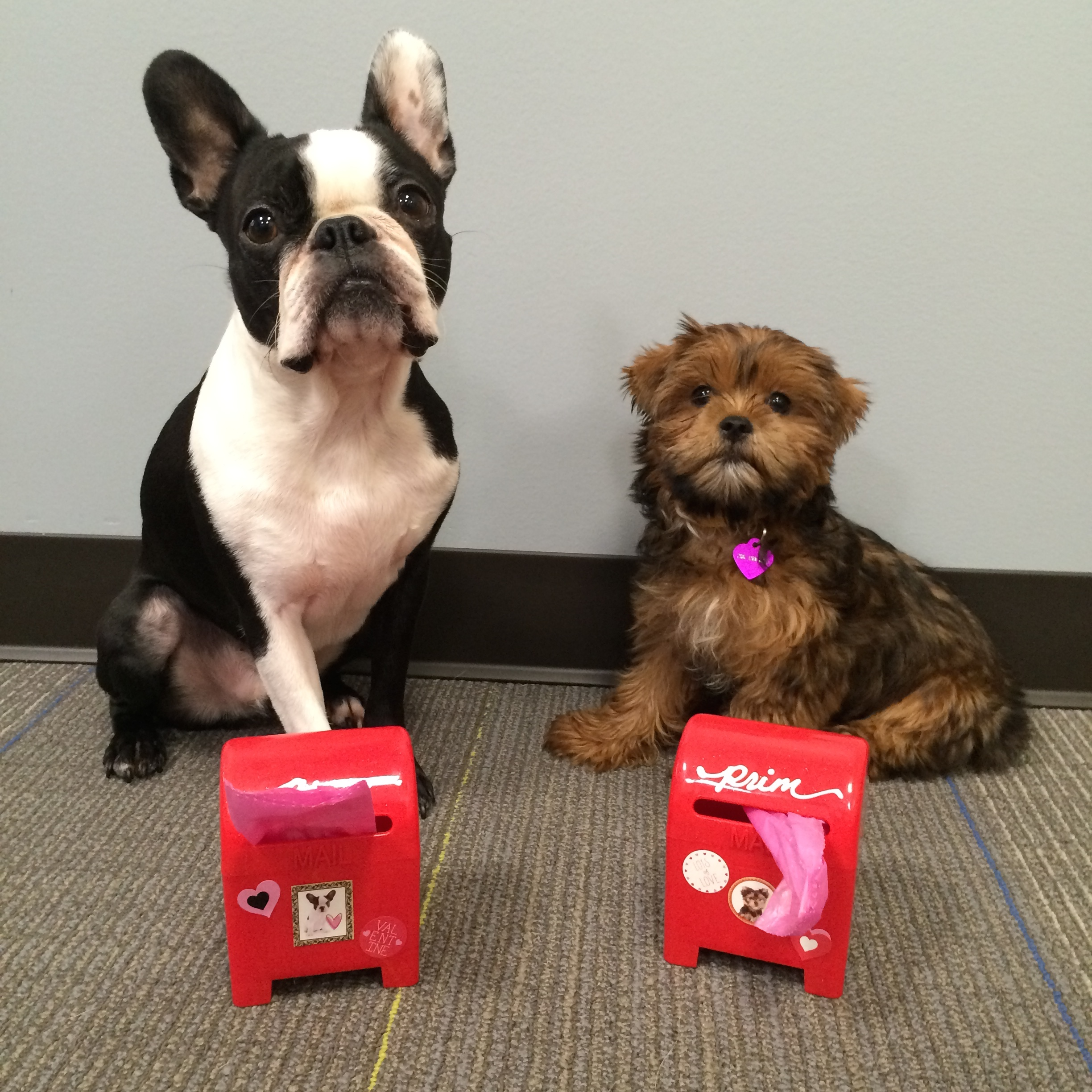 The Results Are Clear: DIY Valentine Crafts Are Even Better When You Try  Them With Your Dog In Mind. This Valentineu0027s Day, Donu0027t Forget A Gift For  Your Dog, ...