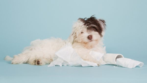 TP, Tissues, Paper Towels: The Secret Reason Your Dog is OBSESSED