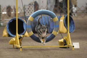 agility-tire