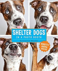 cover shelter dogs in a photo booth by guinnevere shuster