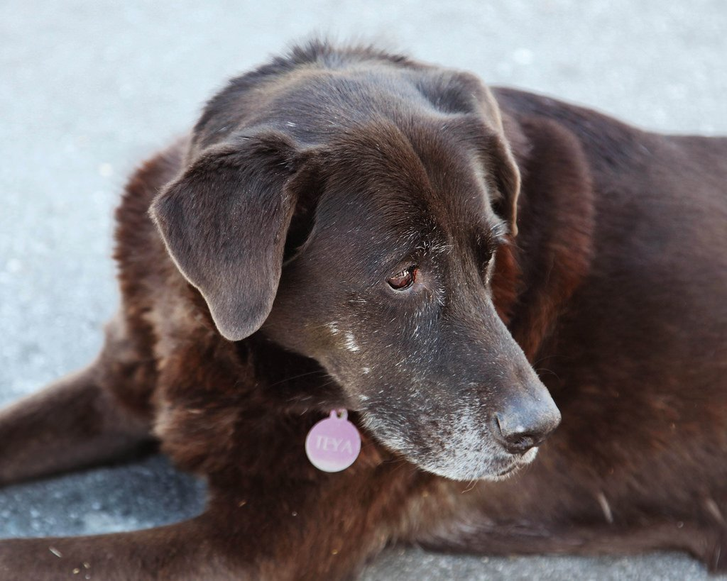 cushings-senior-lab
