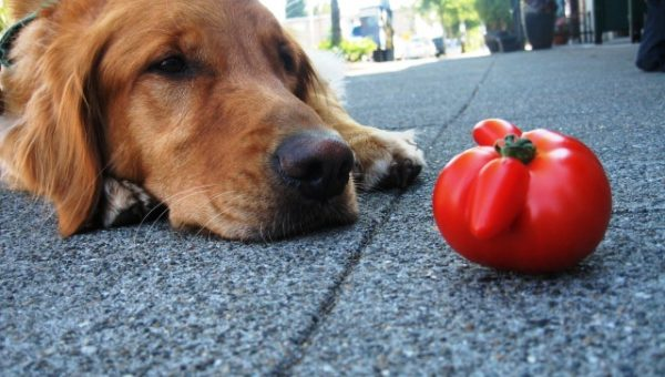 9 Surprisingly Dangerous Foods for Dogs (Starting with Popcorn)