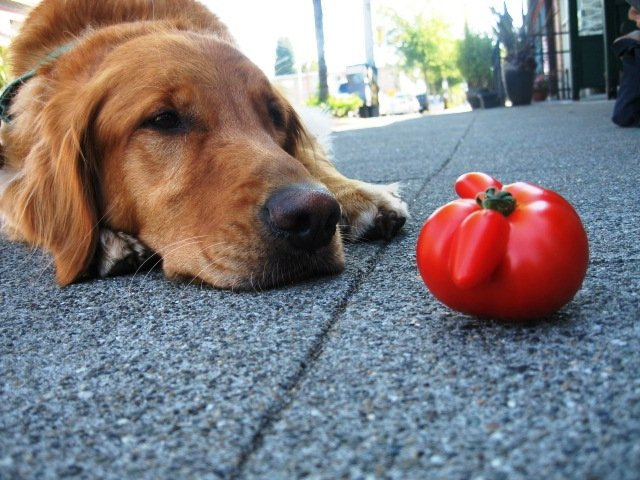 Sensational 9 Surprisingly Dangerous Foods For Dogs Starting With Home Interior And Landscaping Ologienasavecom