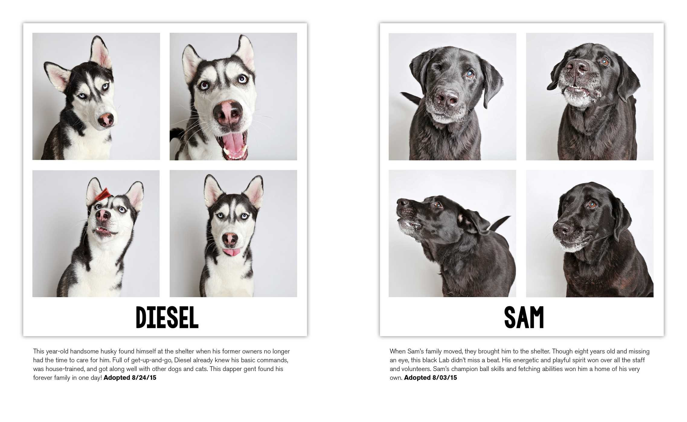diesel and sam shelter dogs in a photo booth guinnevere shuster