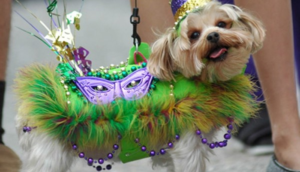 These Dogs Rule at Mardi Gras