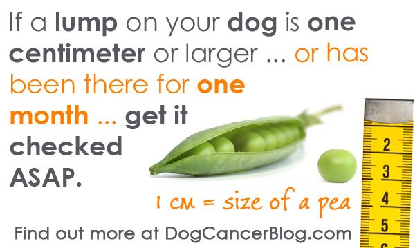 when to get a lump checked by your vet
