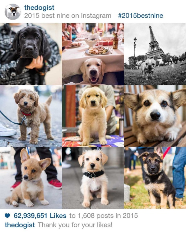the dogist bestnine