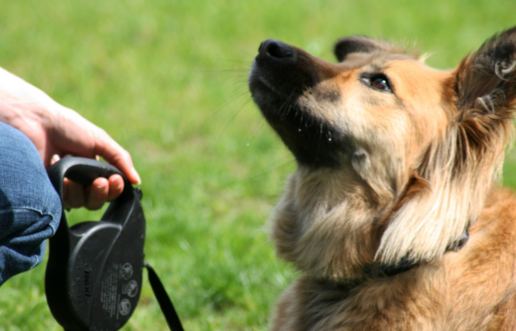 Creative Dog Training Reviews