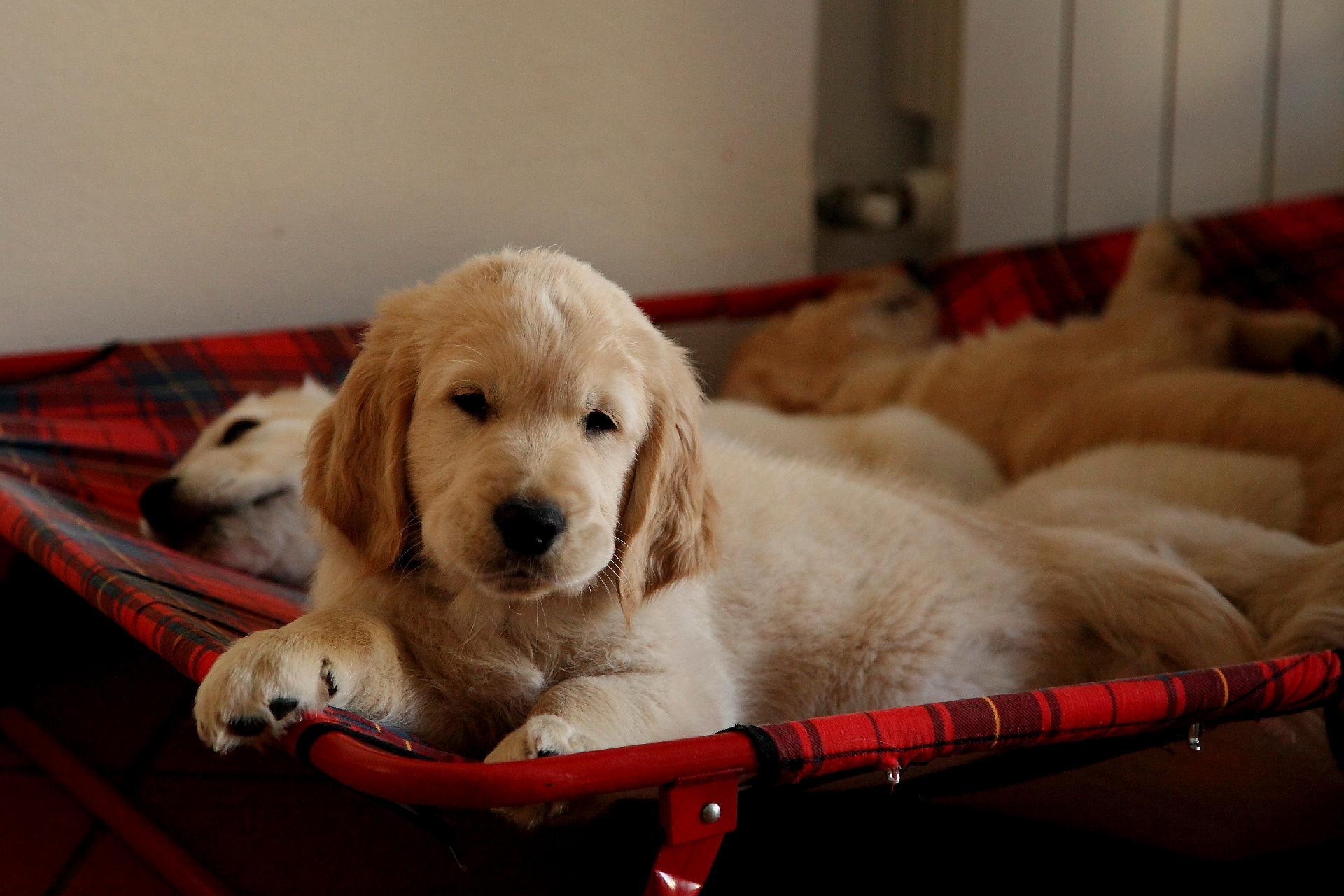 dog training Southampton