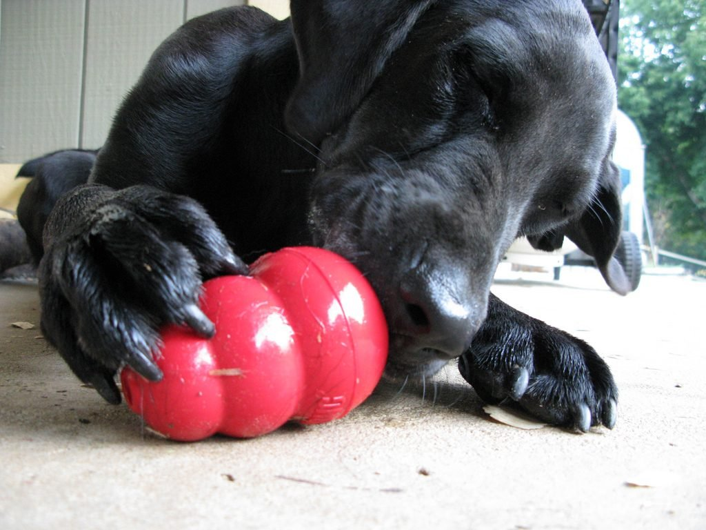 Dog Kongs Pets At Home
