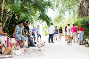 Locals line up around the block for CANDi clinics. To date, they've spayed or neutered approximately 10,000 animals.