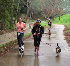 Leash Your Fitness founder Dawn Celapino says it's important to train your dog to be comfortable in crowded and chaotic environments before running or walking a race.