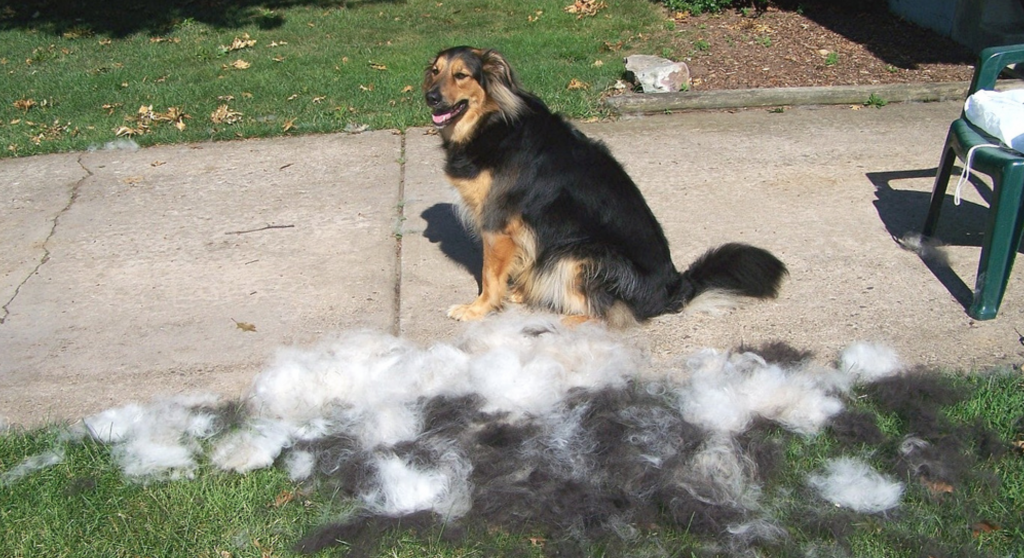 If you have a high-shedding dog, make sure you brush him outside. Image via Flickr.