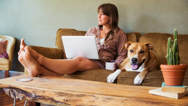 The Arizona Dog Lover's Guide to Canine Safety