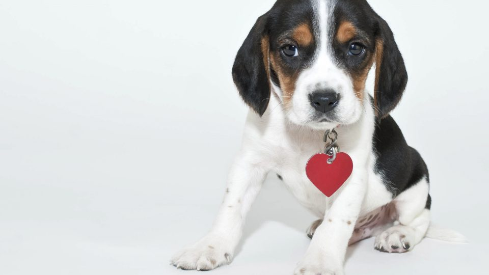 5 Easy Homemade Valentineu0027s Treats For Your Dog
