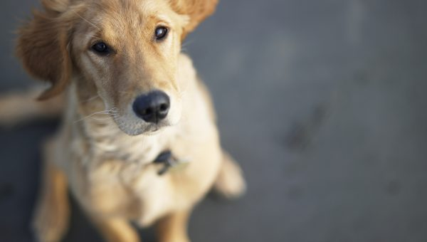 Why Are Dogs Called 'Man's Best Friend'?