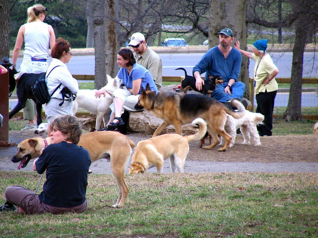 The 8 Most Dog Friendly Cities In America Right Now The Dog