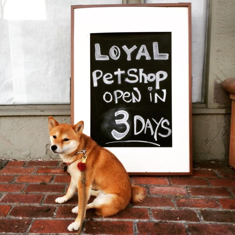 LOYAL Pet Shop Sign