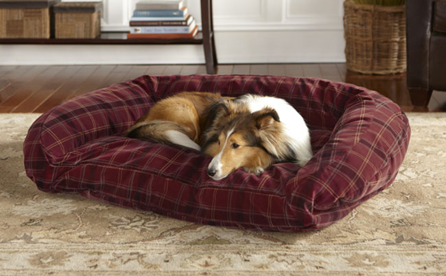 6 indestructible dog beds for chew-tastic dogs | rover