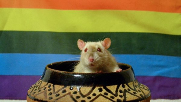 12 Unusual Pets for True Animal Lovers